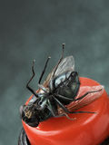 A fly on the back. Fly lying on the red button Royalty Free Stock Photos