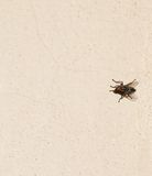 Fly background Royalty Free Stock Images
