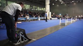 Fly ball competition during International Dog Show stock footage