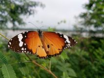 Fly in Beauty. Hiw the Nature& x27;s beauty is being expressed by ths butterfly Stock Photography