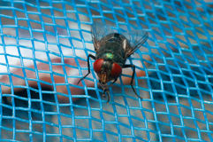 Fly on blue net Stock Images