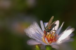 Fly with bokeh stock images