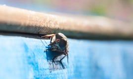 Fly / brake / horsefly Stock Image