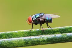 Fly on branch Royalty Free Stock Images