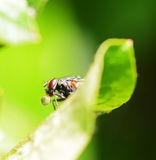 Fly and bubble Royalty Free Stock Photography