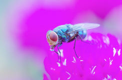 Fly and bubble Stock Images