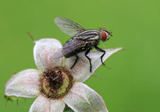 Fly on the calyx Royalty Free Stock Photos