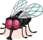 Fly cartoon Stock Photo