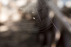 Fly caught in a spider web Stock Photos