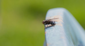 Fly. On a chair in the backyard royalty free stock photo