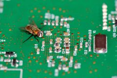 A fly on a circuit board Royalty Free Stock Images
