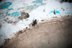 Fly close up. Fly on concrete street bench in the park Royalty Free Stock Images