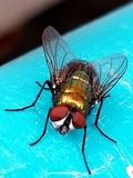 Fly close up royalty free stock images