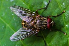 Fly closeup Royalty Free Stock Images