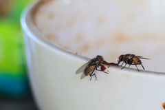 Fly on coffee mugs Royalty Free Stock Image