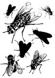 Fly collection Royalty Free Stock Images