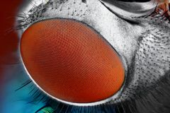 fly compound eye surface   Royalty Free Stock Images