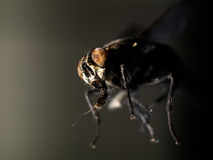 Fly in dark Stock Images