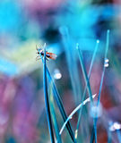 Fly in the dewy grass bright sunny morning bokeh background Royalty Free Stock Photo