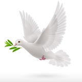 Fly dove Stock Photos
