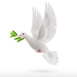 Fly dove Royalty Free Stock Photos