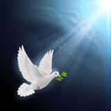 Fly dove Stock Images