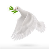 Fly dove Stock Photography