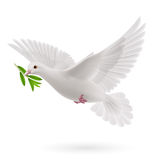 Fly dove Stock Photo