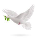 Fly dove Stock Photo