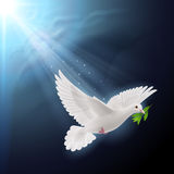Fly dove in sunlight Stock Images