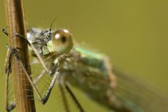 The fly, dragonfly has a rest under the sun. Close up. Wildlife. Stock Photos