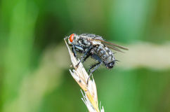 Fly on dried flower grass Stock Image
