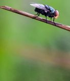 Fly on dry grass background for texture Royalty Free Stock Photos