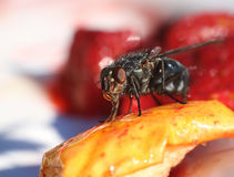 Fly eating sweet fruit macro close-up Stock Photo