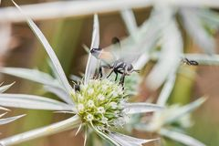 Fly Eating From Wild Spiky Flower Royalty Free Stock Photography