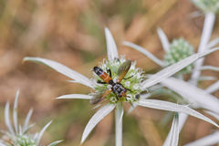 Fly Eating From Wild Spiky Flower stock images