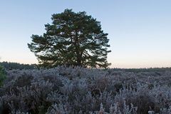 Fly Enden in moorland in the early morning with fog Stock Photo