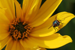 A fly enjoys the warmth of the sun Stock Photo