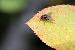 A fly enjoys the warmth of the sun Royalty Free Stock Photos