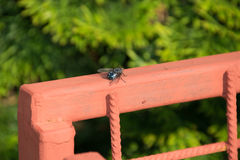 Fly on the fence stock photos