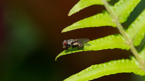 Fly on fern leaf Stock Photography
