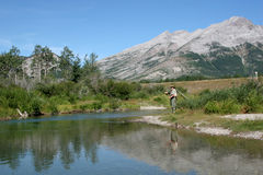Fly Fisher on stream. In rockies stock photo