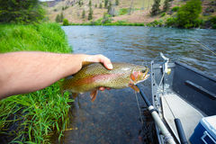 Fly Fisherman Holding Trophy Rainbow Trout Stock Image