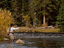 Fly Fisherman Royalty Free Stock Photo