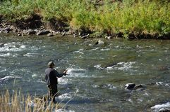 Fly Fisherman in the water. A man fly fishing in a sream Royalty Free Stock Image