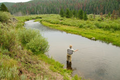 Fly Fishing. A fisherman casting on a stream in Wyomming Royalty Free Stock Images