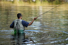 Fly Fishing. A man in waders fly fishes in a mountain stream Royalty Free Stock Photos