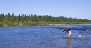 Fly fishing. Salmon angler in action on a river royalty free stock photos