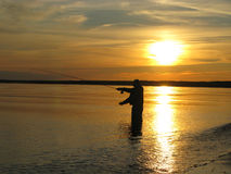 Fly fishing. Fisherman in river fly fishing at sunrise Royalty Free Stock Photos