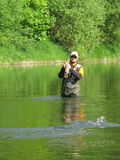 Fly fishing. On river - fisherman catch the fish Royalty Free Stock Photo